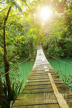 Epic Bridge Over Jungle River by Tim Hester