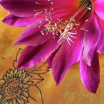 Epiphyllum ✨ #flower #gerrisgarden by Go Inspire Beauty