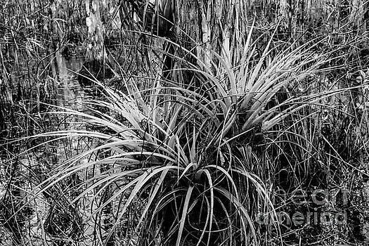 Bob Phillips - Epiphyte Bromeliads 2