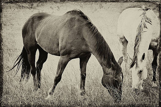 Equine Friends Antiqued by Theresa Tahara