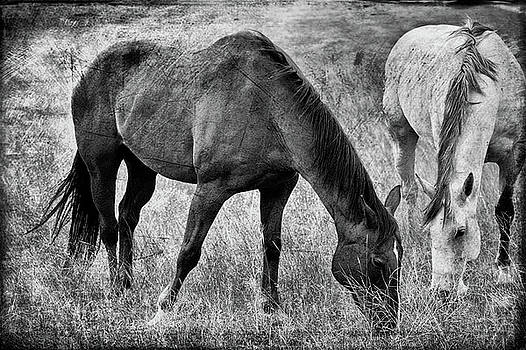 Equine Friends Black And White by Theresa Tahara
