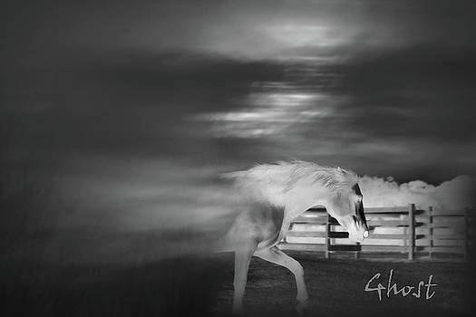Equine Ghost - One by Ann Lambert