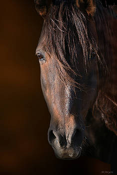 Equine by Melisa Meyers