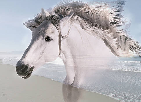 Equine Shores II by Athena Mckinzie