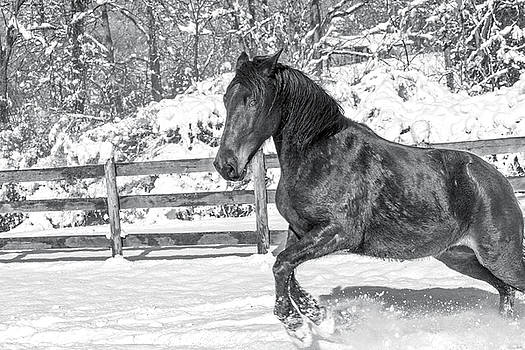 Equine Snowy Winter Country by Betsy Knapp