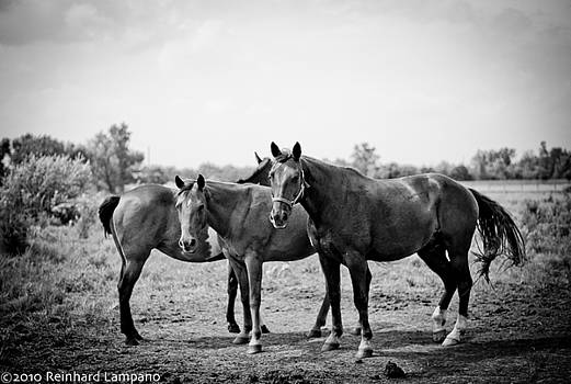 Equine Too. by Reinhard Lampano