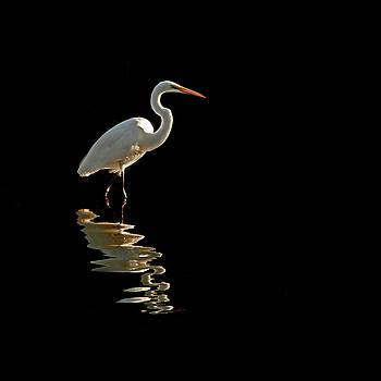 Ergret Reflecting by Stuart Harrison