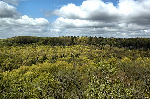 Kathi Shotwell - Escarpment Spring 1