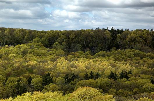 Kathi Shotwell - Escarpment Spring 2