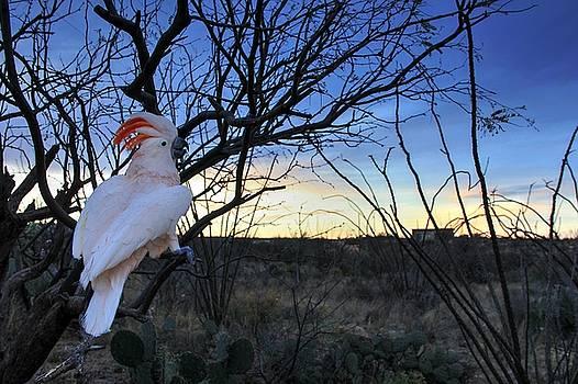 Esher at Sunset  by Kimmi Craig