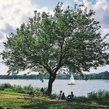 Esplanade Tree by Brian McWilliams