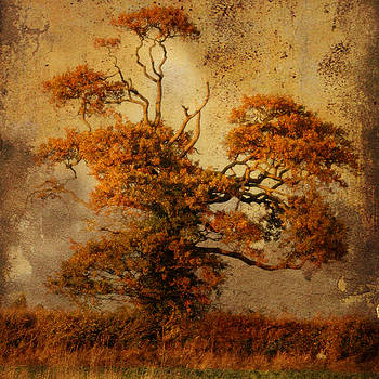 Estampe Tree by Sonia Stewart