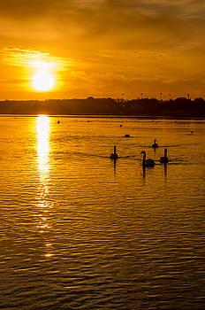 Martina Fagan - Estuary Sunset