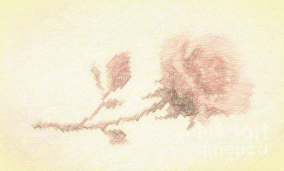 Etched red Rose by Linda Phelps