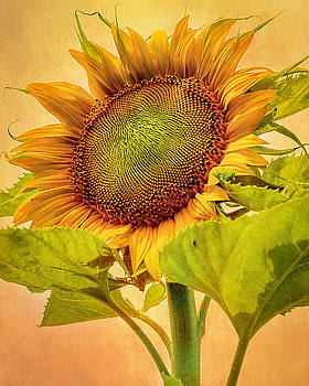 Ethan's Sunflower by Kimberly Wilson