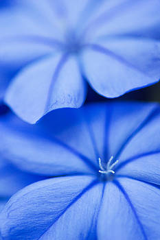 Ethereal in Blue by John McQuiston