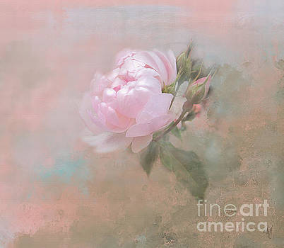 Ethereal Rose by Victoria Harrington