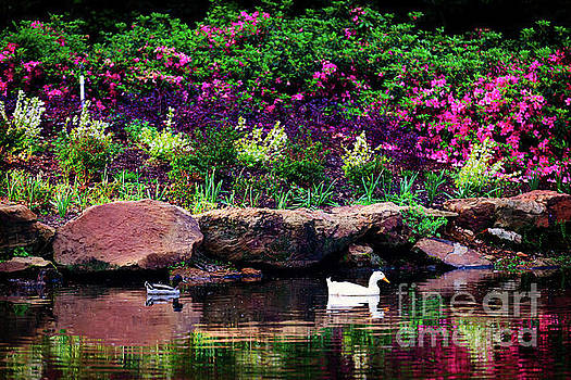 Ethreal Beauty at the Azalea Pond by Tamyra Ayles
