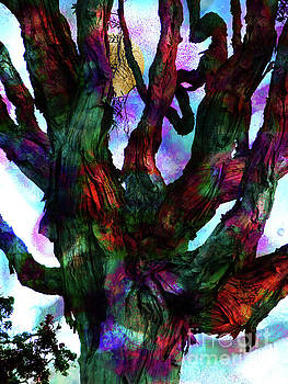 Eucalyptus Tree by Robert Ball