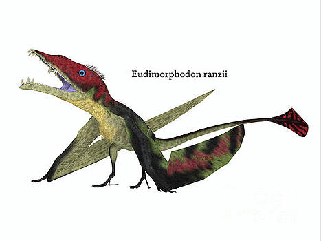 Eudimorphodon Resting with Font by Corey Ford