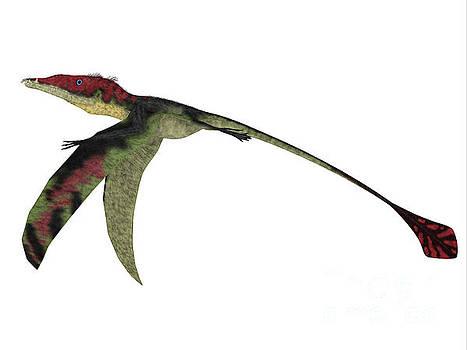 Eudimorphodon Wings Down by Corey Ford