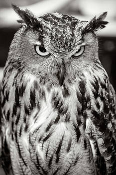 Eurasian Eagle Owl Black and White by Wes and Dotty Weber