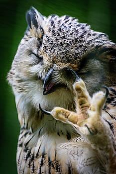 Eurasian Eagle Owl by Libor Vrska