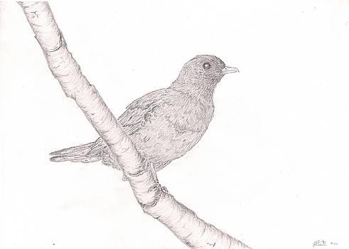 European Blackbird by Laura Mort