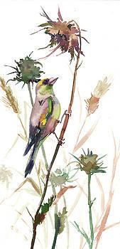 European Goldfinch in the Field by Suren Nersisyan