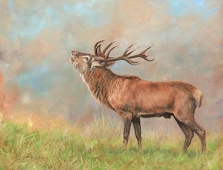 David Stribbling Artwork For Sale Preston Lancashire