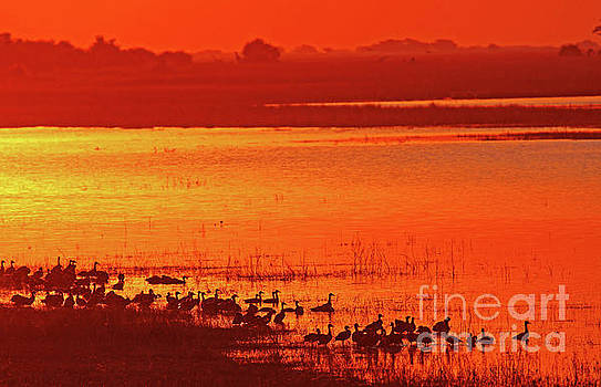 Evening at Chobe river, Botswana by Wibke W