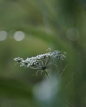 Evening flower by Tiina M Niskanen