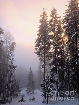Evening Fog by Victor K