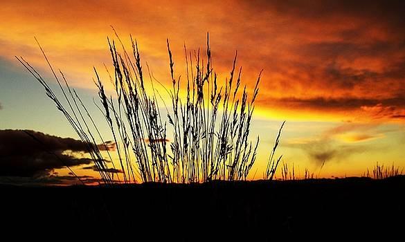 Evening Glo by Carol Milisen