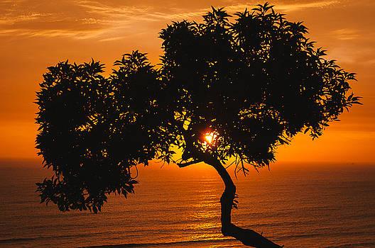Evening Glow by Jose Vazquez