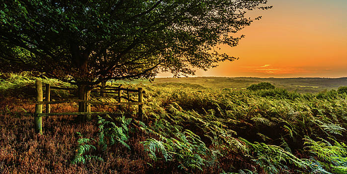 Evening Glow by Nick Bywater