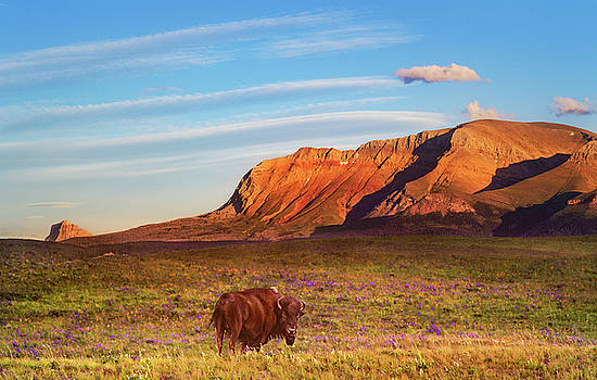 Evening Graze by Tracy Munson