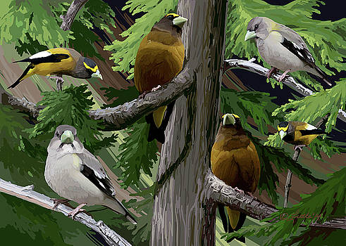 Evening Grosbeaks by Pam Little