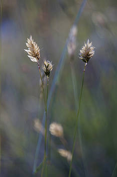 Evening hay 6/2016 by Tiina M Niskanen