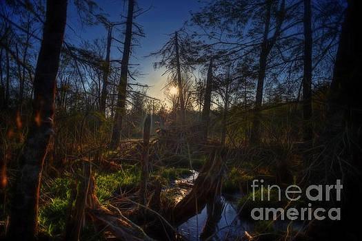 Dan Friend - Evening in a Cranberry Glades bog