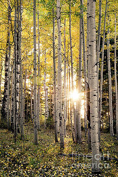 Evening In An Aspen Woods Vertical by The Forests Edge Photography - Diane Sandoval