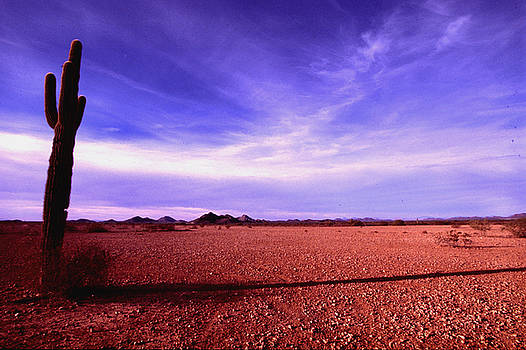 Bill Williams - Evening in the Arizona Desert