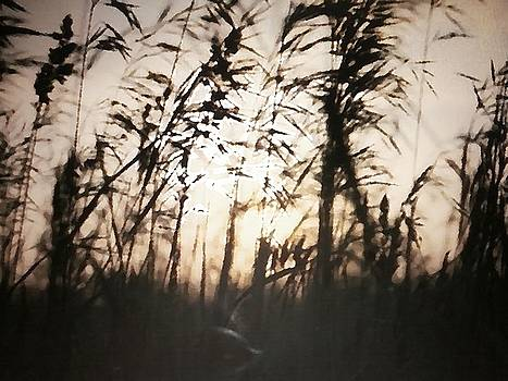Evening in the Country by Jennifer Choate