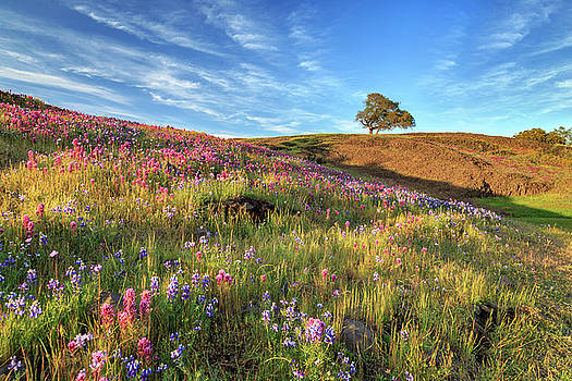 Evening Light At North Table Mountain by James Eddy
