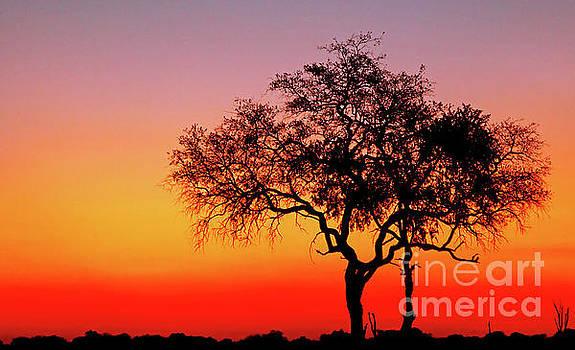 Evening light, Botswana by Wibke W