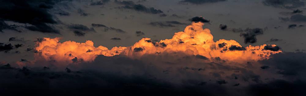 Evening Light by Steven Poulton
