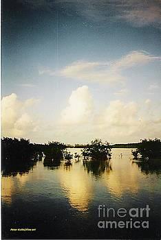 Evening Mangrowe by Peter Kulik