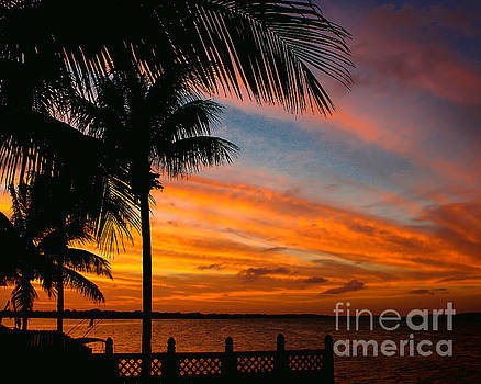 Evening Palm Sky by Nancy Yuskaitis