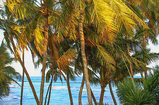 Evening Palms in Trade Winds by Bonnie Follett