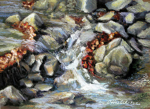 Evening Stream by Carole Haslock